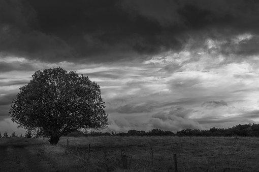 Sky, Tree, Cloud, Landscape, Field, Nature, Monochrome