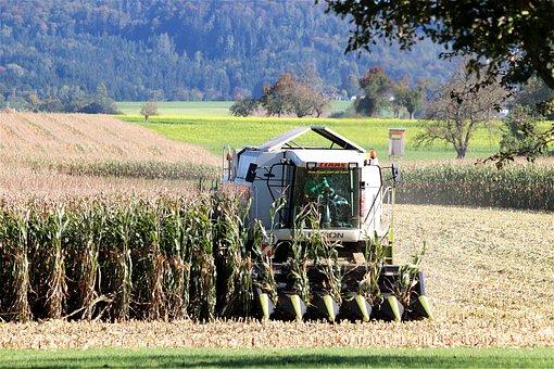 Corn Harvest, Combine Harvester, Cornfield