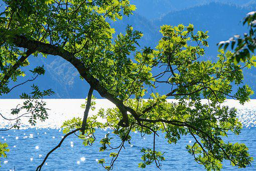Tree, Construction Pole, Nature, Branch, Hanging, Lake