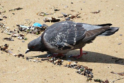 Dove, Seagull, Sea, Sea Bird, Bird, The Coast, Summer