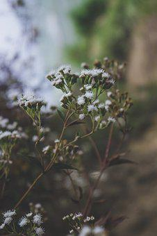 Flowers, Nature, Plant, Garden, Blossom, Bloom, Summer