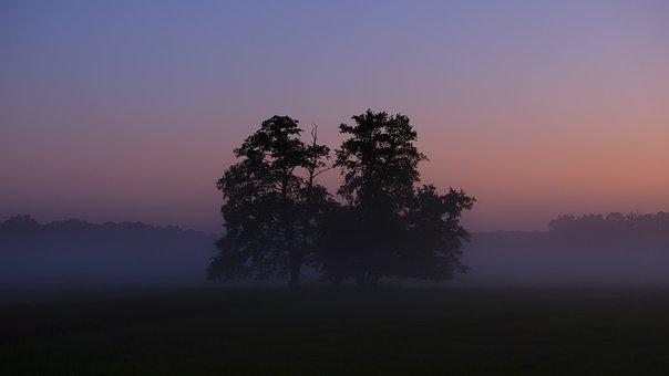 Sunrise, Morning, Fog, Rest, Trees, Summer, Landscape