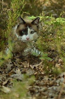 Cat, Forest, Fur, Head, Face, Animals, Cute