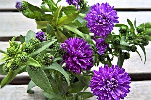Flowers, Asters, Herbstastern, Garden Flowers