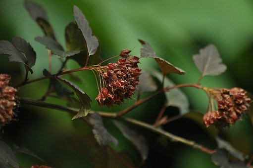 Branch, Seeds, Green, The Picturesque, Autumn, Fruit