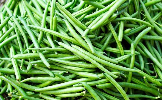 Beans, Harvest, Vegetables, Food, Healthy, Eat, Bio