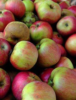 Apple, Vitamins, Healthy, Red, Fresh, Fruit, Harvest