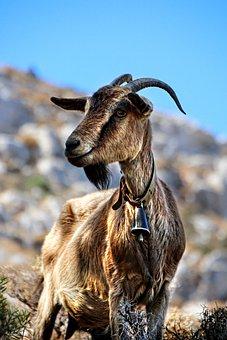 Goat, Greece, Graceful, Kos, Animal, Nature, Livestock