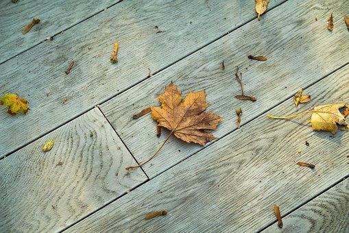 Autumn, Leaves, Leaf, Fall, October, Nature, Landscape