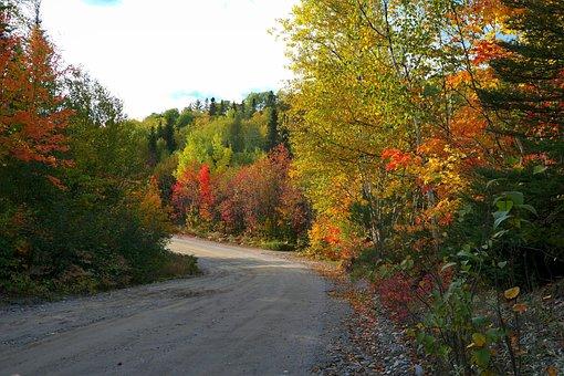 Landscape, Autumn, Nature, Mood, Colors, Forest, Leaves