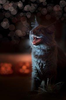 Cat, Blue, Black, Animal, Light, Bokeh, Orange, Scary