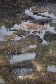 Bog, Swamp, Marsh, Wetland, Nature, Landscape, Water
