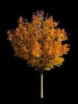 Nature, Tree, Autumn, Season, Isolated, Background
