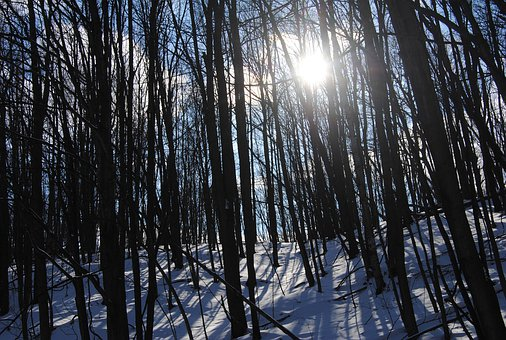Forest, Woods, Snow, Winter, Nature, Landscape, Trees