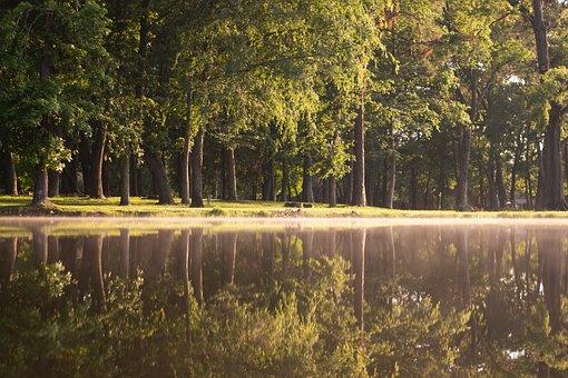 Park, Water, Fog, Nature, Landscape, Scenic, Lake