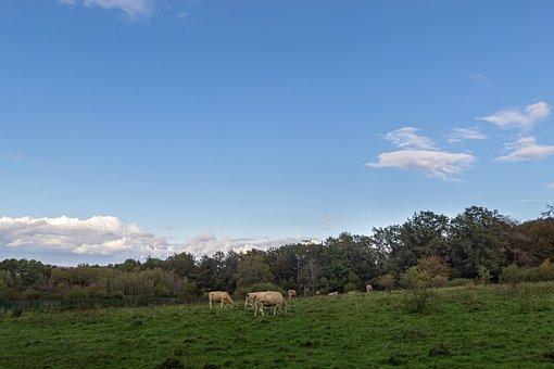 Grass, Pasture, Field, Nature, Sky, Landscape, Grazing