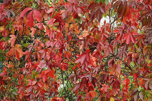 Autumn, Foliage, Colorful, Tree, Nature, October, Red