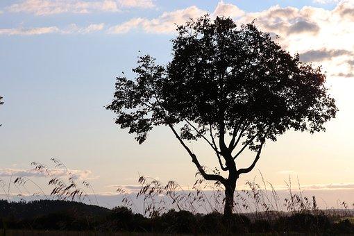 Tree, Silhouette, Landscape, Evening, Tree Silhouette
