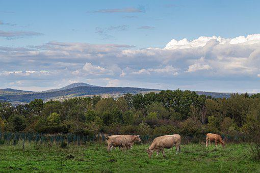 Pasture, Grass, Nature, Cow, Field, Grassland, Sky