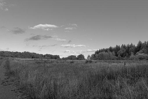 Grass, Field, Landscape, Nature, Sky, Tree, Monochrome