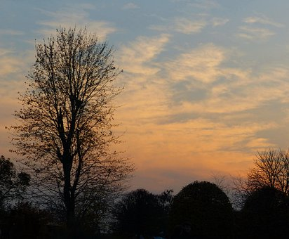 Tree, Sunset, Sky, Clouds, Silhouette, Nature