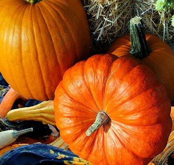 Pumpkin, Thanksgiving, Autumn, Harvest, Vegetables