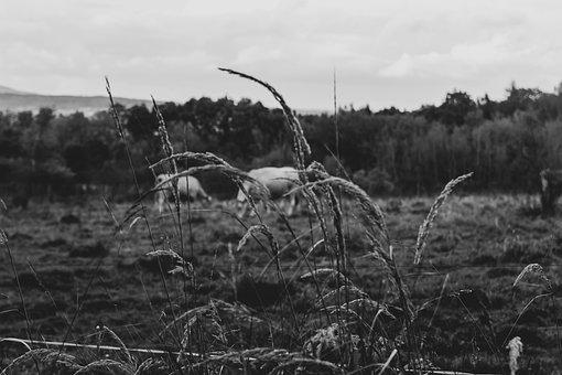 Grass, Field, Tree, Monochrome, Nature, Plant