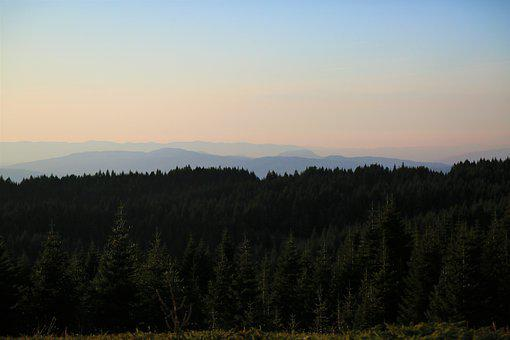 Forest, Landscape, Nature, Mountains, Trees, Rural