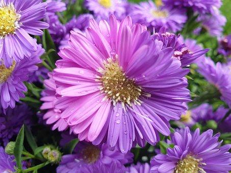 Flower, Pink, Purple, Rain, Wet, Green