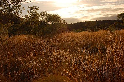 Corn, Grass, Wheat, Summer, Landscape, Season, Natural