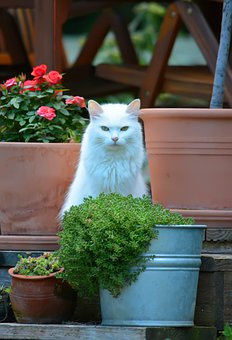 Cat, White, Flowers, Garden, Eyes, Fur, Animal, Pot