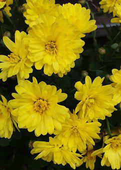 Flowers, Floral, Spring, Bloom, Yellow, Plant, Flora