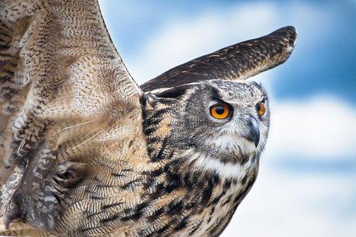 Owl, Bird, Flight, Air, Blue, Fly