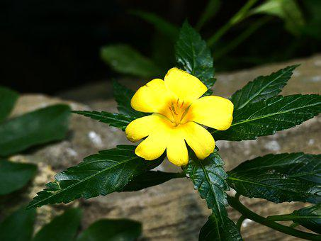 Flower, Blossom, Bloom, Plant, Yellow, Botany, Flora