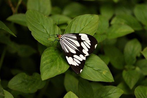 British Moth, Nature, Colours Of Nature, Seasons