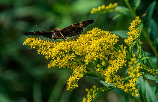 Butterfly, Summer, Nature, Colorful, Flower, Insects