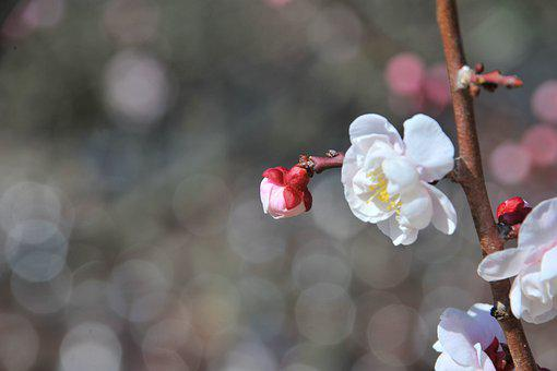 Cherry Blossom, Flowers, Spring, Affix, Pink, Wood