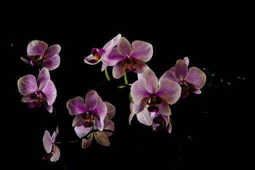 Orchid, Orchis, Flower, Plant, Flowers, Beautiful