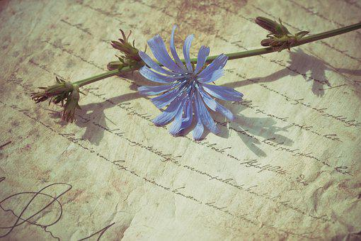 Old, Vintage, Purple, Flower, Nostalgia, Background