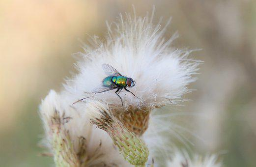 Fly, Green, Flower, Nature, Fauna, Insect, Garden