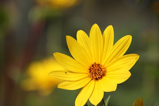 Flowers, Bright Yellow, Plants, Garden, Gardening