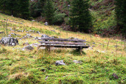 Bank, Alm, Meadow, Landscape, Nature, Wood, Vacations