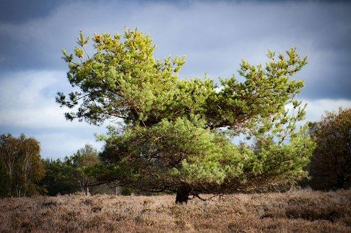 Grass, Air, Veluwe, Netherlands, Tree, Landscape