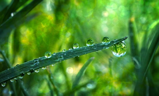 Grass, Drop Of Water, Meadow, Blade Of Grass, Rain