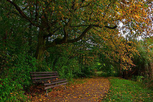 Autumn, Park, Bank, Rest, Nature