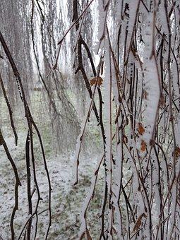 Jelly, Winter, Nature, Crystals, Snow, Gel, Frozen