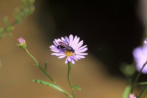 Bee, Flowers, Insects, Nature, Pollen, Honey, Plants