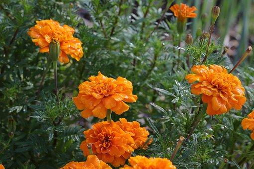 Plants, Garden, Flowers, The Shining, Orange Color