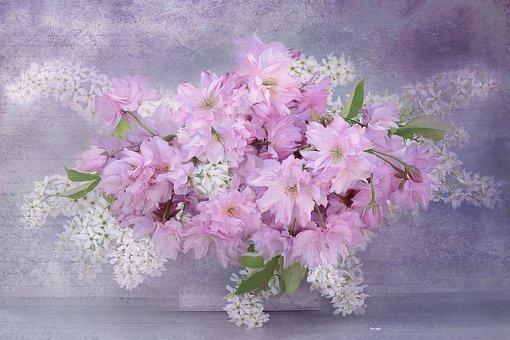 Nature, Landscape, Cherry Blossoms, Roses, Flowers