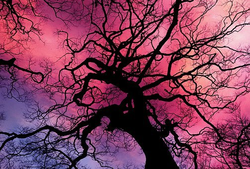 Trees, Silhouette, Sky, Clouds, Sunset, Twilight